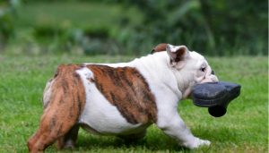 Hundehaftpflicht Versicherung