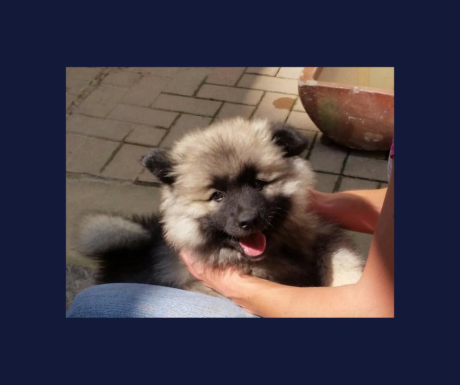 Hundehaftpflicht Tipps Für Den Versicherungsabschluss: Dein Erster Hund: Was Du Vor Dem Kauf Beachten Solltest
